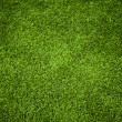 grass textur — Stockfoto