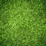 Grass Texture — Stock Photo #13367180