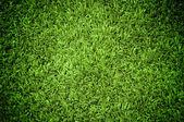 Grass Texture — Stock Photo