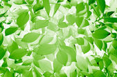 Stylish Green Leaves Texture — Stock Photo