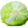Green Iceberg Lettuce Alcapucci — Stock Photo