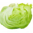 Green Iceberg Alcapucci — Stock Photo