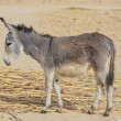 Donkey — Stock Photo #22075201