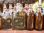 Liquor with snakes and centipedes — Stock Photo