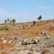 Rocky terrain in the Galapagos Islands — Stock Photo