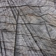 Weathered wood — Photo