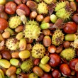 Colourful autumnal conkers, acorns, beechnuts and cobnuts — Stock Photo