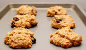 Oatmeal raisin cookies cooling on a baking sheet — Stock Photo