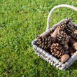 Stock Photo: Fir cones in basket on green grass