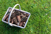 Rustic basket full of pine cones on grass — Stok fotoğraf