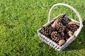 Fir cones in a basket on green grass — Stock Photo