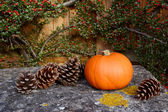 Small pumpkin and fir cones on a stone bench — Stock Photo
