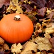 Ripe orange pumpkin among dry autumn leaves — Stock Photo