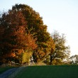 Fall trees on a hilltop lit by the setting sun — Stock Photo