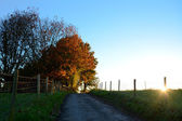 Path leading uphill to sunlit autumn trees at sundown — Stock Photo