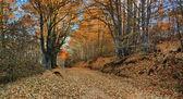 Autumn road tree tunel — Stock Photo