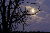 Moon and branches — Stock Photo
