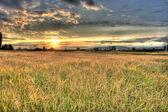 рисовые поля закат — Стоковое фото