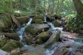 Mountain river in the forest — Stock Photo