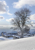 Frozen tree on mountain top and view of far mountain chains — Stock Photo
