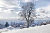 连连看冻结树剪影冬季风景 — 图库照片