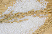 Rice plants and white rice ready for cooking on the wooden table, closeup — Stock Photo