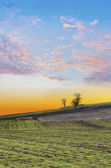 Sunset over agricultural green field and trees on the horizon and cloudly sky — Stock Photo
