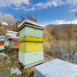 Honey bee hives box - Stock Photo