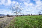 Yeşil çimenlerin üzerinde yaprakları ile tek ağaç — Stok fotoğraf