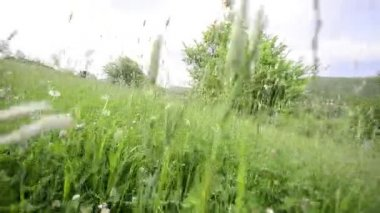 Dandelions and grass medow, crane — Stock Video