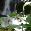 Glass of drinking water near the foliage waterfall — Stock Video
