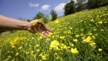 Touching flower field medow — Stock Video