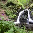 Stock Video: Cloudforest waterfall deep in untouched nature forest with ecological clewater