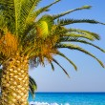 Palms on empty idyllic tropical sand beach — Stock Photo