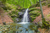 Waterfall in forest — Stockfoto