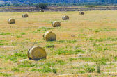 Harvested field with round straw bales — Stock Photo