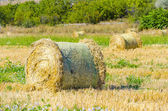 Harvested field with round straw bales — Stok fotoğraf