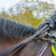 London policeman on horse — Stock Photo #48252657
