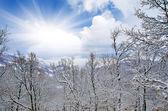 Vinterlandskap — Stockfoto