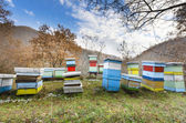 Honey bee hives box — Stock Photo
