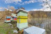 Honey bee hives box — Stock Photo