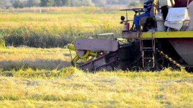 Combine harvester harvesting a crop of oats — Stock Video