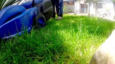 Mow lawn grass cutter in yard. — Stock Video