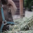 Pony horse feed by child — Stock Video #49624795