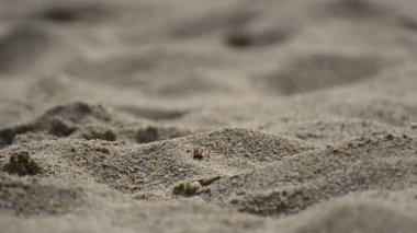 Man walking barefoot at a sandy beach desert — Stock Video