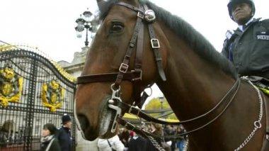 Policie kavalérie ve službě na koně stráže — Stock video