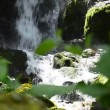 Glass of drinking water near the foliage waterfall — Stock Video #49803995