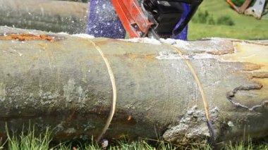 Человек пилит дерево бензопилой — Стоковое видео