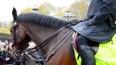 Members metropolitan police Cavalry — Stock Video