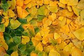 Yellow leaves pattern — Stock Photo